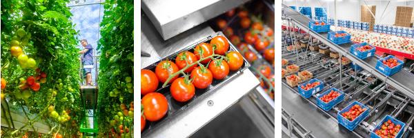 harvest house teelt tomaten duurzaam verpakken kidv
